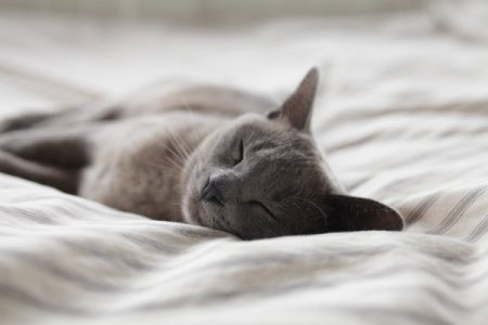 Retrouver le sommeil : 17 conseils pour s'endormir plus rapidement