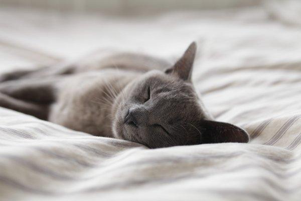 retrouver le sommeil profond