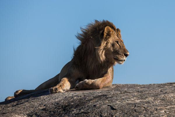 lion quel signe astrologique incompatible en amour